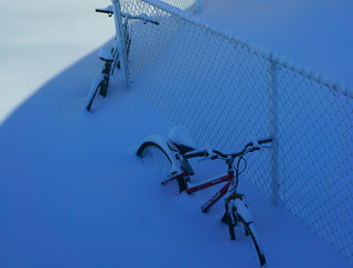 les bleus de l'hiver