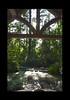 Duke Gardens July 2015 9.06.16 PM (LaPajamas) Tags: nc flora dukegardens gardens