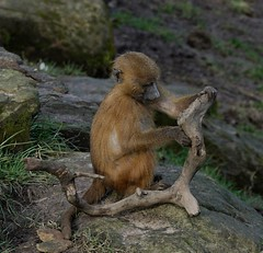 Making his own fun (decorace51) Tags: playing stick yorkshire wildlife park