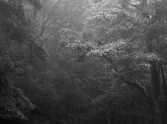 Rainforest Look (D7200) (ssepanus) Tags: d7200 sepan pennsylvania pa clarion nikon lightroom