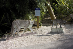 DSC_5629 (ucumari photography) Tags: ucumariphotography naples florida fl zoo january 2018