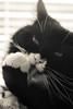 Spit 'n' Polish (Katrina Wright) Tags: dsc1385 cat bw monochrome whiskers face portrait paw tongue tonguetuesdays highkey