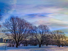 C'est étrange, un arbre, en hiver. (Dare2drm) Tags: terrypellmar parc arbres ciel bordeleau ottawa ontario djfotos hiver winter snow neige rivièrerideau