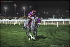 IMG_7203 copy (Services 33159455) Tags: qatar doha horse racing qrec emir horseracing raytohgraphy