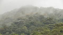 Mist over the forest / Bruma sobre a floresta (Higino Silva) Tags: bruma mist parqueestadualserradobrigadeiro arapongamg mataatlântica atlanticrainforest acaradobrasil
