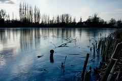 DSC06467 (hofsteej) Tags: middendelfland holland zuidholland netherlands winter february broekpolder vlaardingsekade vlaardingervaart