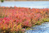 PA230140t_e (mrkevinw08) Tags: portugal algarve parquenaturaldariaformosa parque natural riaformosa