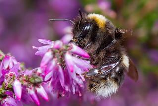 Waving Bee
