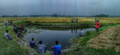 Catching fish in small pond (bulbul057) Tags: fish catchingfish pond people villageside bangladesh