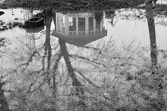Puddle (unbunt.me) Tags: landscape landschaft sooc bw acros fujix100f fuji fujifilm blackandwhite blackwhite