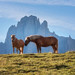 Horses+in+the+Dolomites