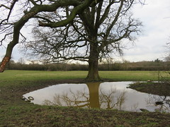 UK - Hertfordshire - Near Bushey - Attenborough's Fields - Flooded area (JulesFoto) Tags: uk england hertfordshire clog centrallondonoutdoorgroup bushey attenboroughsfields