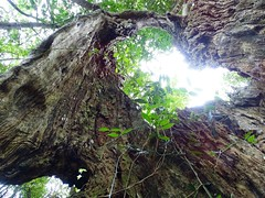 Ingeli Forest, KwaZulu-Natal
