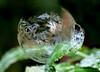 P2060381-frost flowers-- (Bine&Minka2007) Tags: seifenblasen ice frozenbubble bubble soapbubbles frost frostig frosty frozen eisblumen christal outdoor makro macro olympusmacro60mm gx7 germany garten 7dwf friday flora