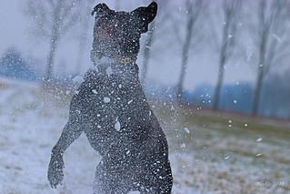 IMG_012347 - Black polar bear