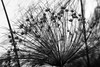 Museu de Arte da Pampulha (Johnny Photofucker) Tags: planta plant pianta bh belohorizonte minasgerais paisagismo jardinagem mg burlemarx lightroom preto branco black white nero bianco bw pb flora noiretblanc vegetação museudapampulha brasil brazil brasile 60mm