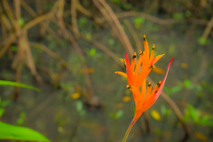 Brighter (Kraften) Tags: ifttt 500px color jungle nature flower bright natural orange flora colorful delicate tropical hike bookeh