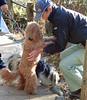 "TOKYO-016 (photozaki) Tags: ""dogs cats"" dog dogs inu cat cats neko shikoku japan ohenro88 ohenro pilgrimage"