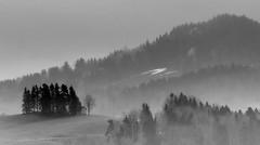 Toggenburg, Switzerland (Swiss.Piton (BH&SC)) Tags: toggenburg ostschweiz swissamateurphotographers switzerland swiss blackandwhite schweizerphotographen schwarzundweiss olympus75mmf18microfourthirdslens olympusomdem5miizuikom75mmf18 zuikolenses mft