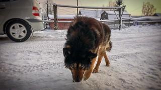 Winter dog 🐕