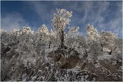 Larra-Belagua012 (Fermin Ezcurdia) Tags: larra belagua navarra pirineo nieve pyrenees esquinordico arlasarette anie