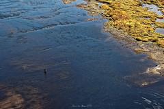 Pêcheur solitaire (sabathius80) Tags: canada québec nature photo picture canon eos 7d mark ii automne autumn eau mer fleuve pêcheur fishing man landscape paysage