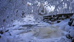 Winter coldness (Kari Siren) Tags: winter frost branch birch water bridge valkeala finland samyang 8mm fisheye