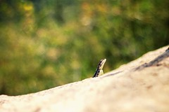 Peekaboo (devmania7) Tags: sunnyafternoon wildlife 1850mm canon50mm canon700d animalportraits