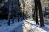 Magical Winterlight (Greet N.) Tags: forest winter snow trees sunlight november assen drenthe