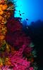 Underwater Landscape (J.Salmerón) Tags: paramuriceaclavata gorgoniaroja underwaterlandscape uw uwphoto underwaterphotography underwater uwphotography underwaterphoto underwaterphotographer wideangle wideanglephotography morocco capdestroisfourches cabotresforcas sea scuba scubadiving dive diving scubadive tauchen plongée buceo buceocabodetresforcas bajoelmar blue colors mar mediterraneansea mediterraneo