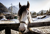 (Lt_Dan) Tags: canon600d canonefs1018mmf4556isstm horse nature 7dwf