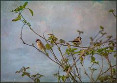 22 gennaio 2018, nel parco della Caffarella come in un dipinto... (adrianaaprati) Tags: bird wildnature branches park tree outdoor textured lenabemannaj painterly sky