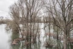 Magical Forrest I (lars_uhlig) Tags: 2018 bonn deutschland germany sieg hochwasser flooding überschwemmung flood wald bäume forrest trees