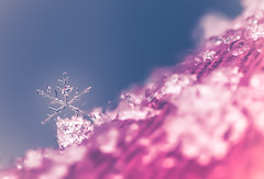 snow crystal (Tomo M) Tags: snow snowflakes weather winter tokyo nature crystal 雪の結晶 大雪 closeup delicate fragile droplets bokeh