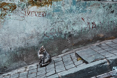 Istanbul, day 3 (kaneko_ryo) Tags: eos5dmarkⅳ ef2470mmf28liiusm turkey istanbul cat