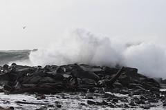 Bird Masseuse (Mïk) Tags: swellday january182018 beach hightide 30ftswells pacificocean oceanshoreswa washington notheotherwashington graysharbornorthjetty graysharbor