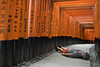 FDT-146 Face-down in Fushimi Inari-taisha (- Cajón de sastre -) Tags: fdt fdtforlife facedowntuesdaygroup i♥facedowntuesday fushimiinari japan japón tokio tokyo creativephotography creativeselfportrait naranja orange perspective perspectiva