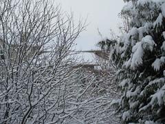 Suburban winter (jamica1) Tags: snow branches winter rutland kelowna okanagan bc british columbia canada