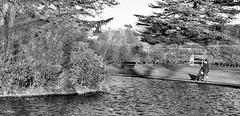 A walk in the park (Tom McPherson) Tags: park girl cold walk pathway path trees pram pushchair fuji xt2