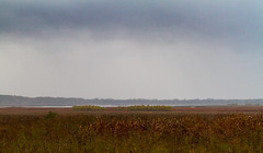 Dixon_JB_374_3796 (Joanne Bouknight) Tags: bunkhouse dixonwaterfowlrefuge illinois mist morning rain storm thewetlandsinstitute yard