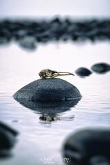 Skull Island (Russ Dixon Photography) Tags: russdixon russdixonphotography newzealand newplymouth taranaki beach ocean seascape sea fujixe2 skull