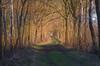 a Warm path (Pieter ( PPoot )) Tags: path goldenhour warm light dwingelderveld
