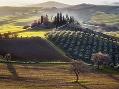 Val d'Orcia Italie (EtienneR68) Tags: landscape colors hills nature mountain montagne paysage sunrise trees pays italie italy valdorcia tuscany toscane