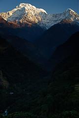 Annapurna South (Dakshin) and Hiunchuli, Annapurna massif, Nepal 2 (Alex_Saurel) Tags: neige asia summit annapurnasouth annapurnadakshin photoreport bluesky goldenhour cielbeu himalaya asian अन्नपूर्णा day reportage annapurnabasecamptrek travel 35mmprint landscape annapurnamassif annapurna nepal photospecs mountainrange blue sunrise snowcappedmountains mountain imagetype valley abctrek morninglight asie chaînehimmalayenne vallée nature photojournalism himalayarange montagne peak scans stockcategories annapurnaconservationarea time photoreportage sommet paysage sony50mmf14sal50f14