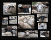 KUS850-0385 (Weinstöckle) Tags: schaf tier landwirtschaft schafherde porträt