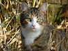 Dirkje (joeke pieters) Tags: 1380315 panasonicdmcfz150 kat poes dirkje cat kitten kitty platinumheartaward