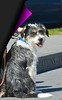A Cutie (Scott 97006) Tags: dog sitting panting warm calm cutie cute