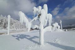 Ice Age Niagara Falls (AncasterZ) Tags: icecoat tree cold freeze snow niagarafalls canada laowa15mmf2