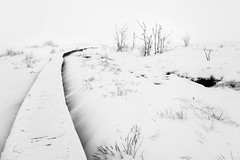 T H E   P A T H (frank-heinen-photographer) Tags: schnee landscape stimmung ©wwwfrankheinenphotographerde frilufts hochmoor eifel kalt cold hohesvenn hautesfagnes fujifilmxt2 moor tree landschaft frozen xf1655mmf28rlmwr 500px winter eis highfens mood snow ice