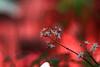 Voigtländer Nokton Classic SC 40 mm f 1.4 - DSCF2079 (::nicolas ferrand simonnot::) Tags: paris 2018 classic prime lens profondeur de champ effet macro bois arbre flou bokeh depth field color night public light rose green yellow orange blue red pink purple vintage manual ciel german voigtländer nokton sc 40 mm f 14 2010s | 10 blades aperture leica m